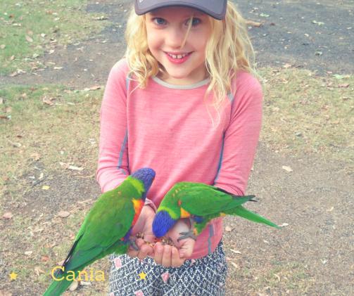 Cania Amelie bird feed