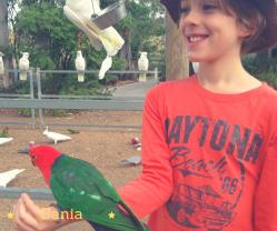 Cania Xav bird feed