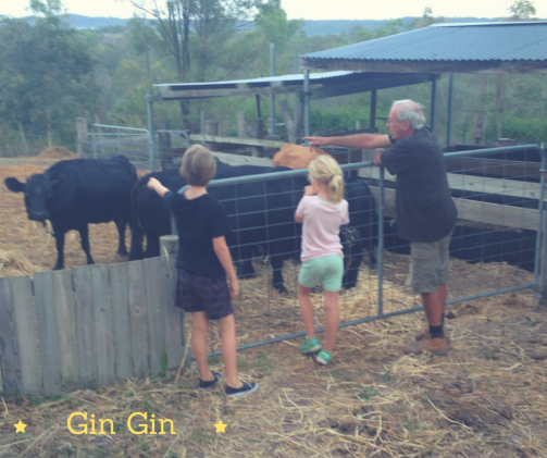 GinGin Cows