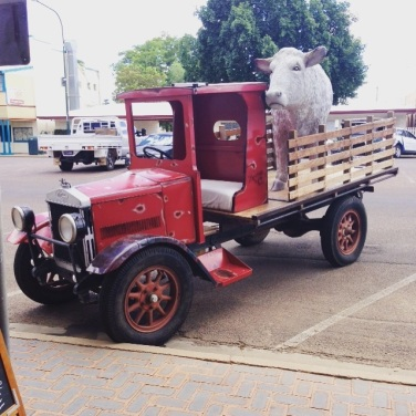 Longreach old wagon bull