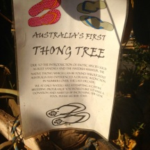 I loved this idea for a thong tree, at Daly Waters Pub, NT
